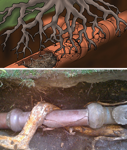 tree root inside drainlines